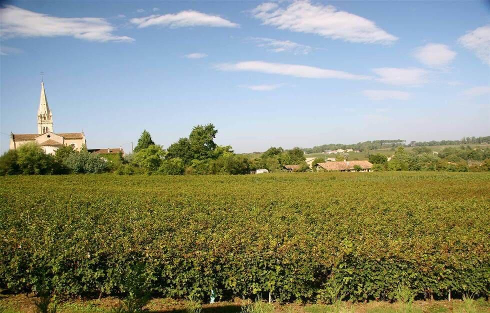 Les vignes qui entourent le Château de Lantic